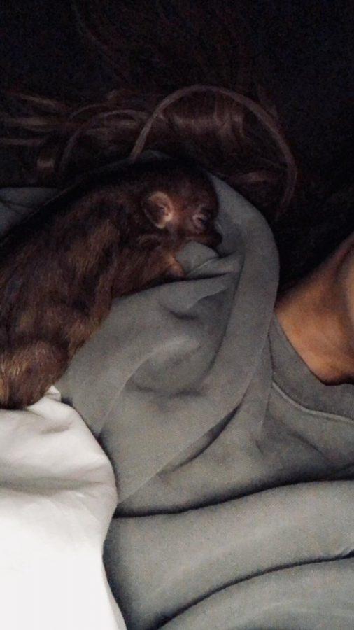Piggy Smallz sleeping on Grande. Photo credit: vignette.wikia.nocookie.net